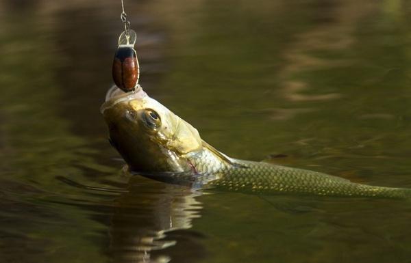 Все на рыбалку! Снят временный запрет на лов рыбы в водоемах