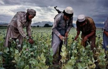 На юге Кыргызстана действуют перевалочные точки афганского наркотрафика