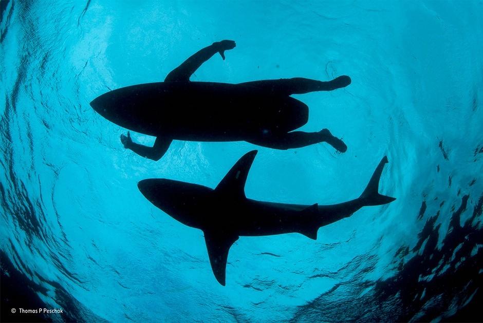 Акула и серфер
