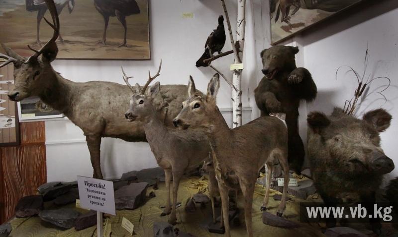 В зоологическом музее появились новые экспонаты