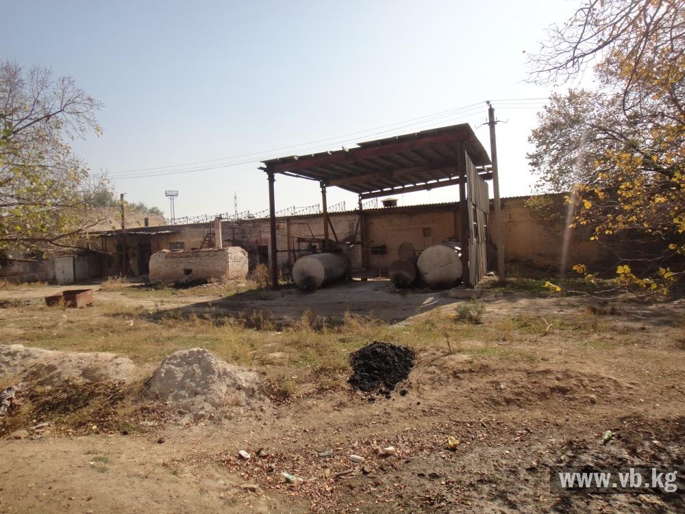 Скот пасется около бывшего ртутного завода в Ноокате