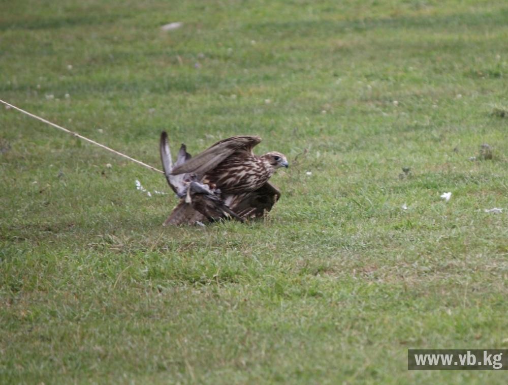 Кыргызстанцы выиграли золото Игр кочевников на охоте с беркутом и соколом