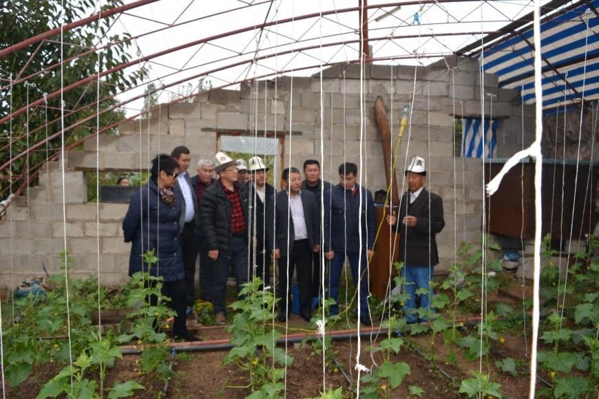 Депутатам показали тепличный бизнес в Токтогуле