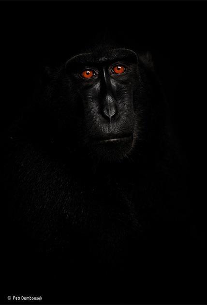 Портрет на темном фоне